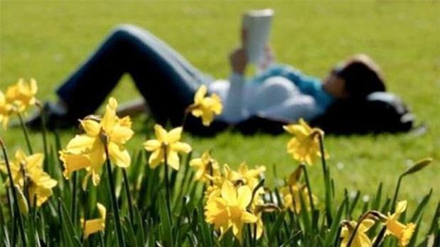 primaverasol